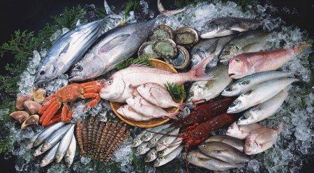 В Украине ищут сотрудников в рыбоохранные патрули