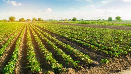 Более 95 млн грн уже перечислено украинским сельхозпроизводителям на компенсацию процентов по кредитам
